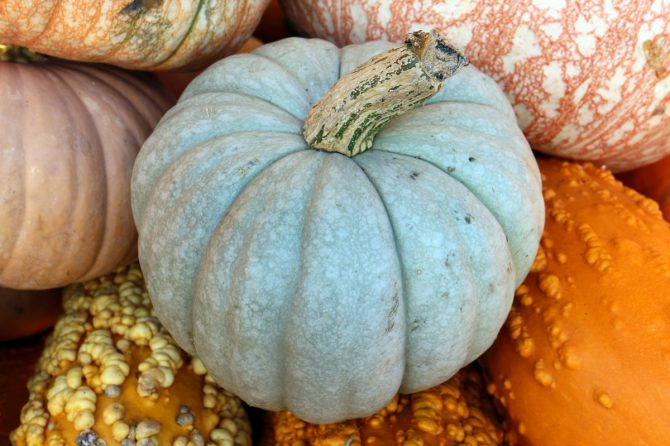 The Health Benefits of Winter Squash